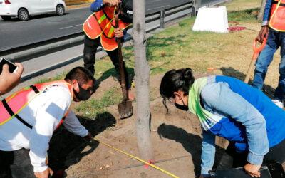 GI participa activamente en reforestación de la CDMX